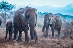 Elefanten im Regen_IGB7672