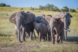 Elefanten_D4N_1547