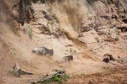 wildebeest jump to death_IWG4283