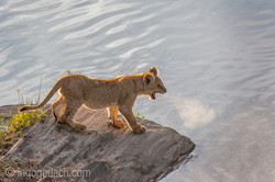 Der Mut der kleinen Löwen_IWG4485