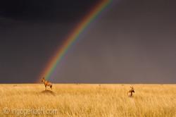 Over the Rainbow_Topi_IWG0027
