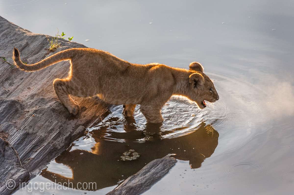 Der Mut der kleinen Löwen_IWG4468