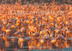 Kalender Flamingo Impressionen