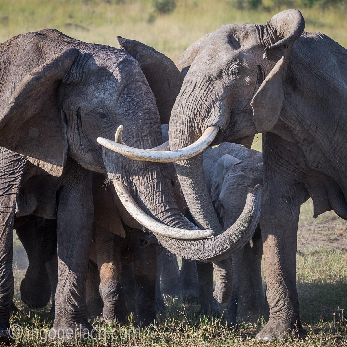 Elefanten_D4N_1575