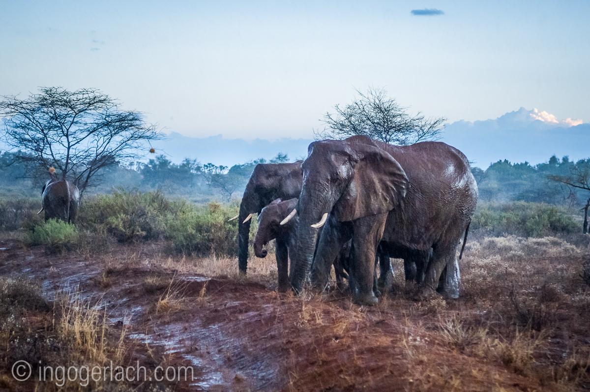 Elefanten im Regen_IGB7678