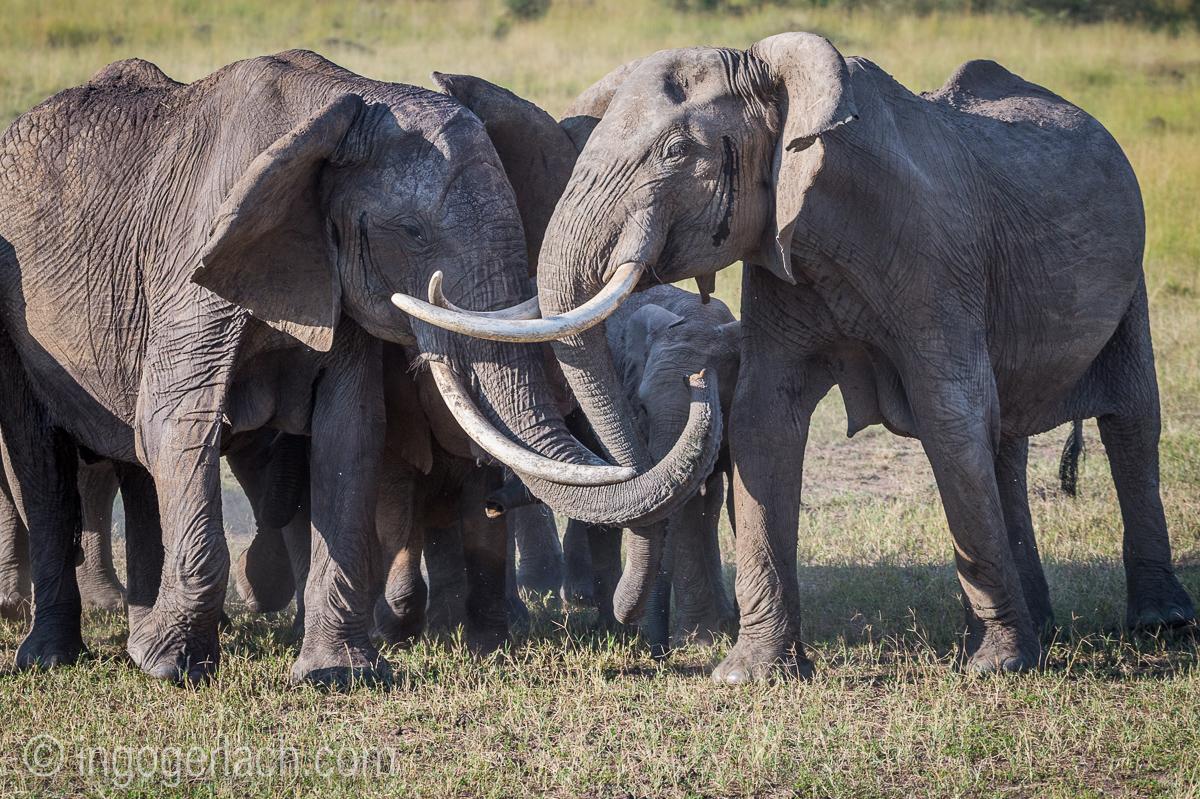 Elefanten_D4N_1574