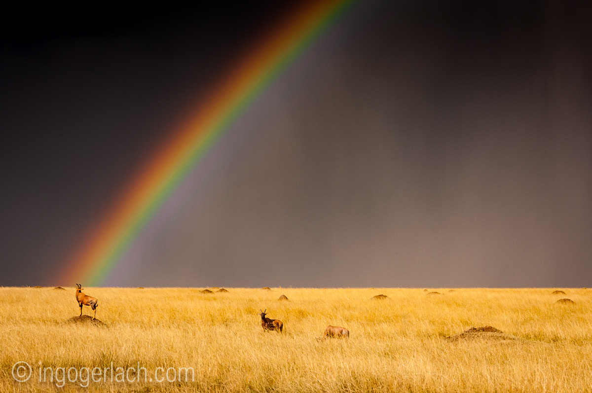 Over the Rainbow_Topi_IWG0019