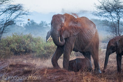 Elefanten im Regen_IGB7660