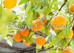 Kalender Orangen und Zitronen