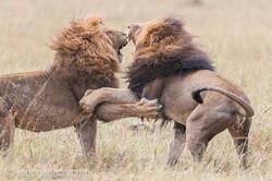 Löwen: Kampf der Giganten_D3X8134-2