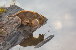 Der Mut der kleinen Löwen_IWG4459