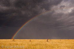 Over the Rainbow_Topi_IWG0029