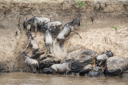 The great Migration_D3S3195