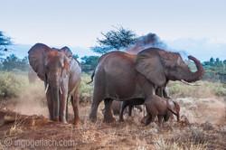 Elefanten im Regen_IGB7735