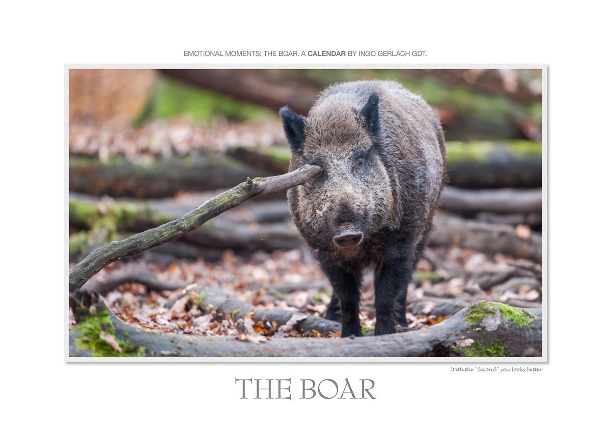 Kalender Wildschweine