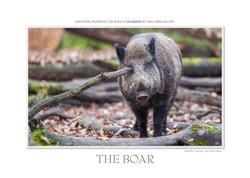 Kalender Das Wildschwein
