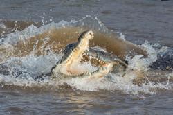 Krokodile © Ingo Gerlach_D726653