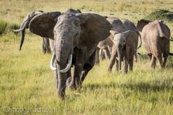Elefanten_IG7_3575