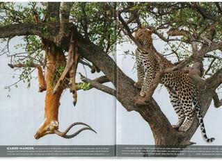 Le Figaro und mein Leopardenbild...