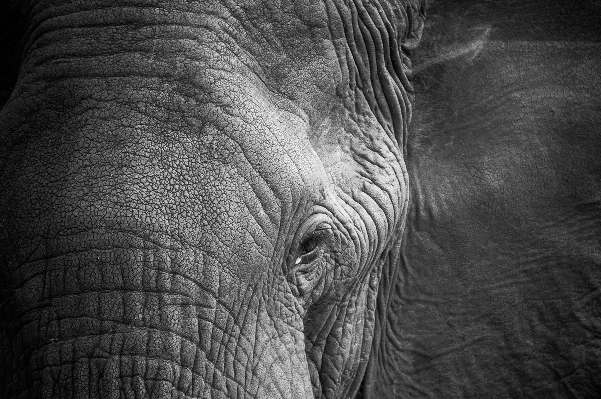 Elefant © Ingo Gerlach_IWG5327