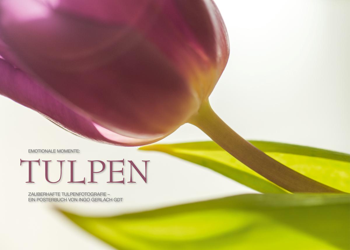 Kalender Tulpen