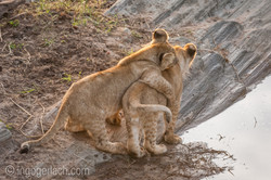 Der Mut der kleinen Löwen_IWG4452