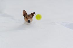 Terrier © Ingo Gerlach_D3S2045
