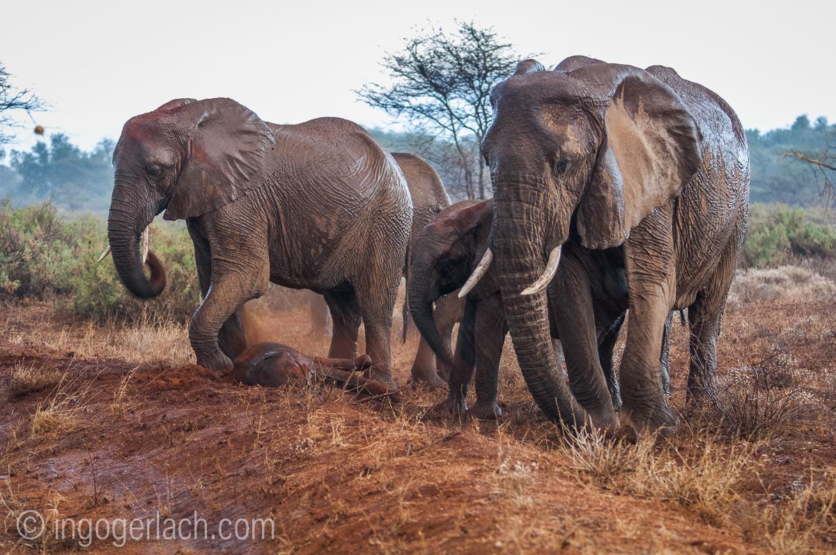 Elefanten im Regen_IGB7637