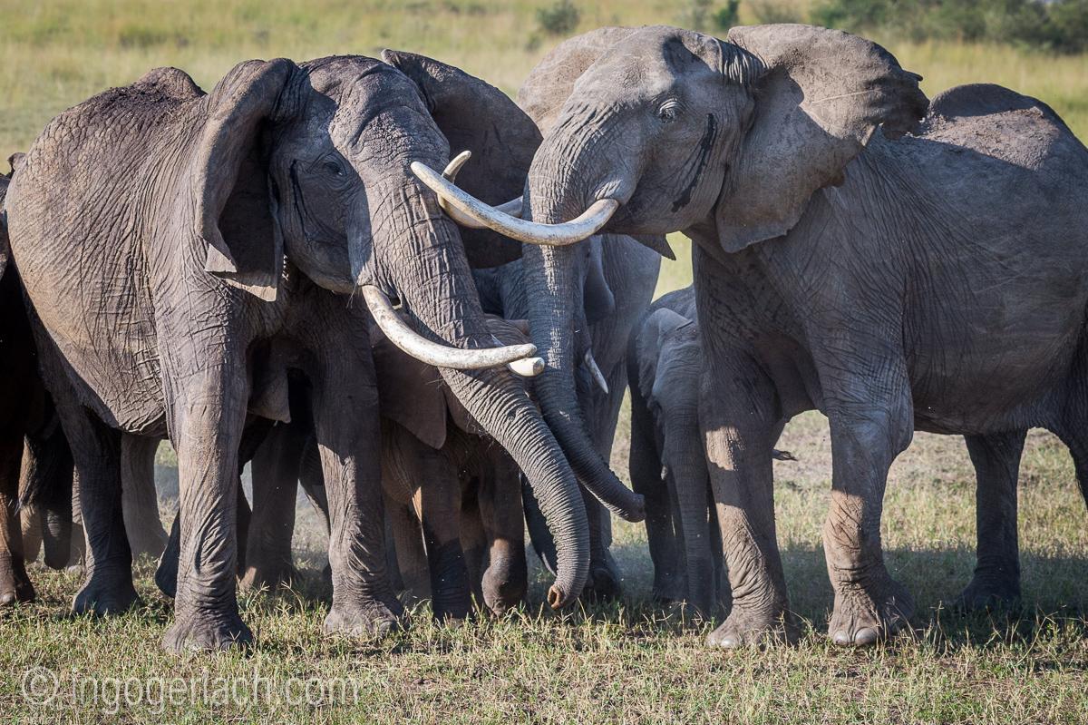 Elefanten_D4N_1576