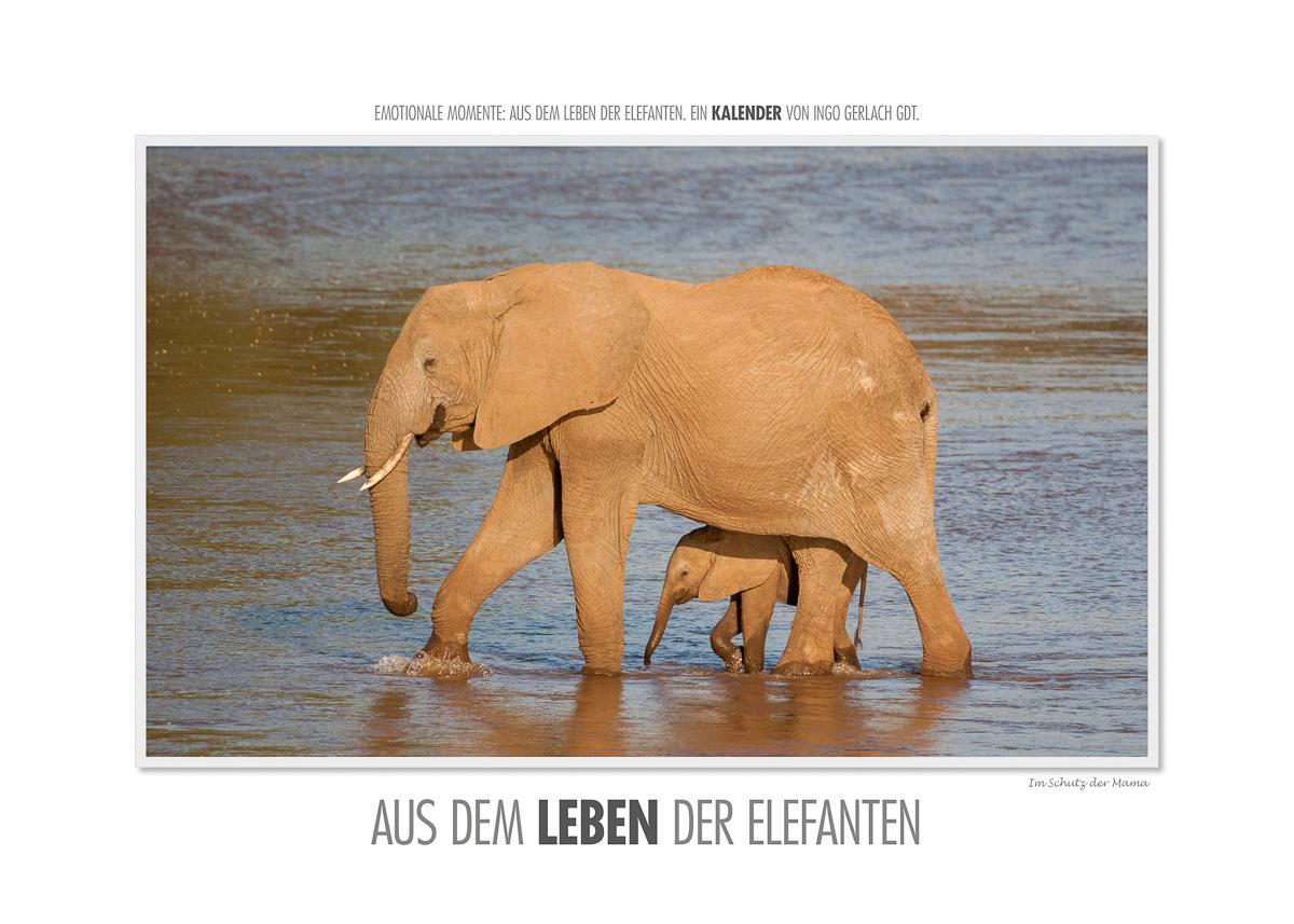 Kalender Aus dem Leben der Elefanten