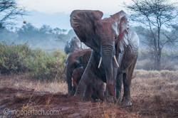 Elefanten im Regen_IGB7663