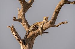 Leopard © Ingo Gerlach_IG7_3409