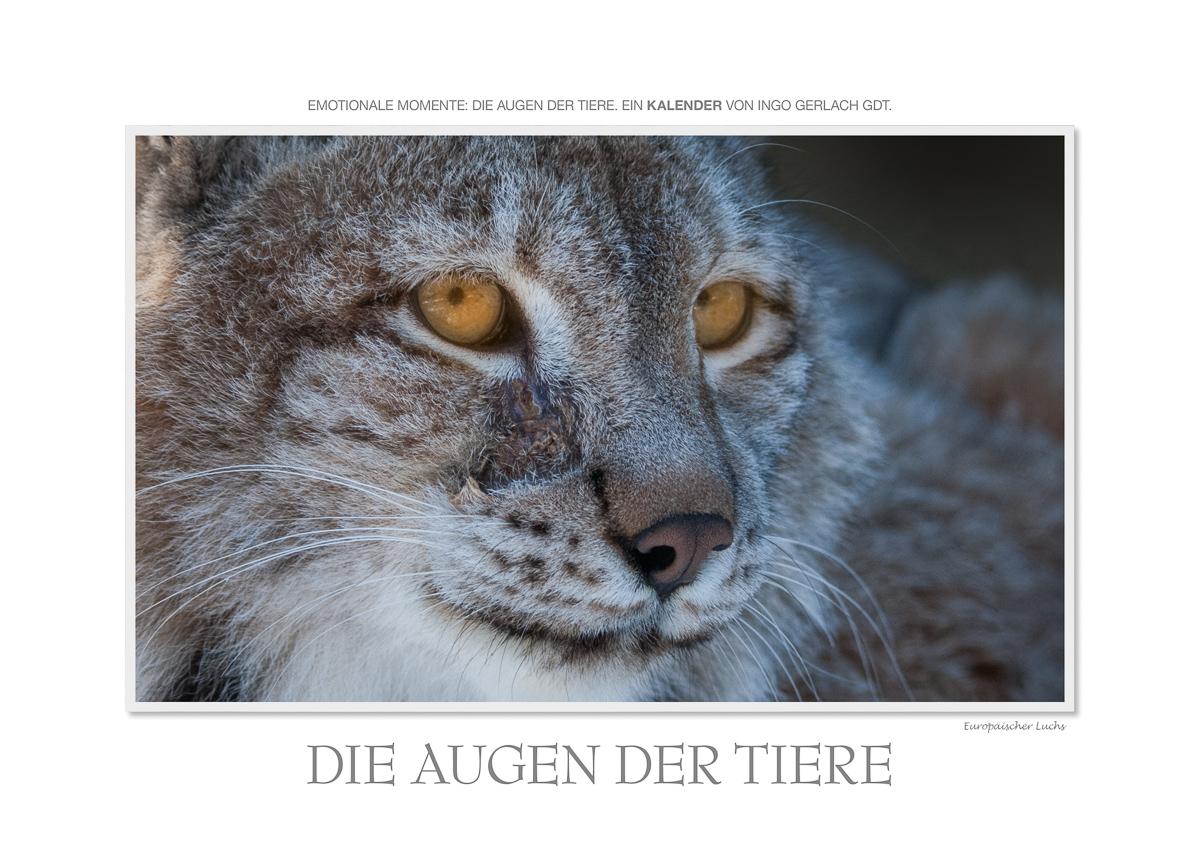 Kalender Tieraugen