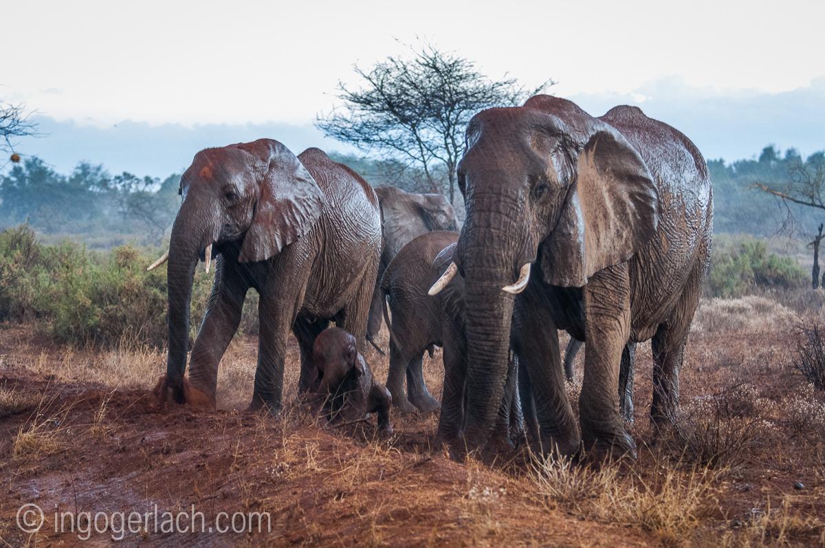 Elefanten im Regen_IGB7648