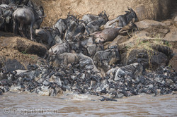 The great Migration_D3S2804