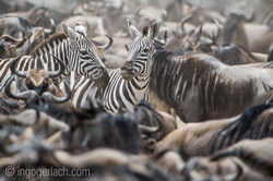 The great Migration_D3S9298