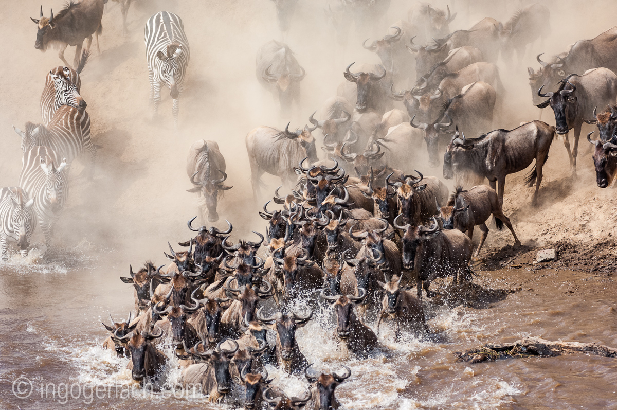 The great Migration_IWG0028