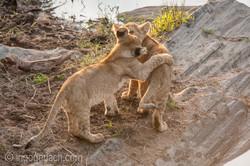 Der Mut der kleinen Löwen_IWG4454