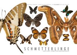 Kalender Schmetterlinge