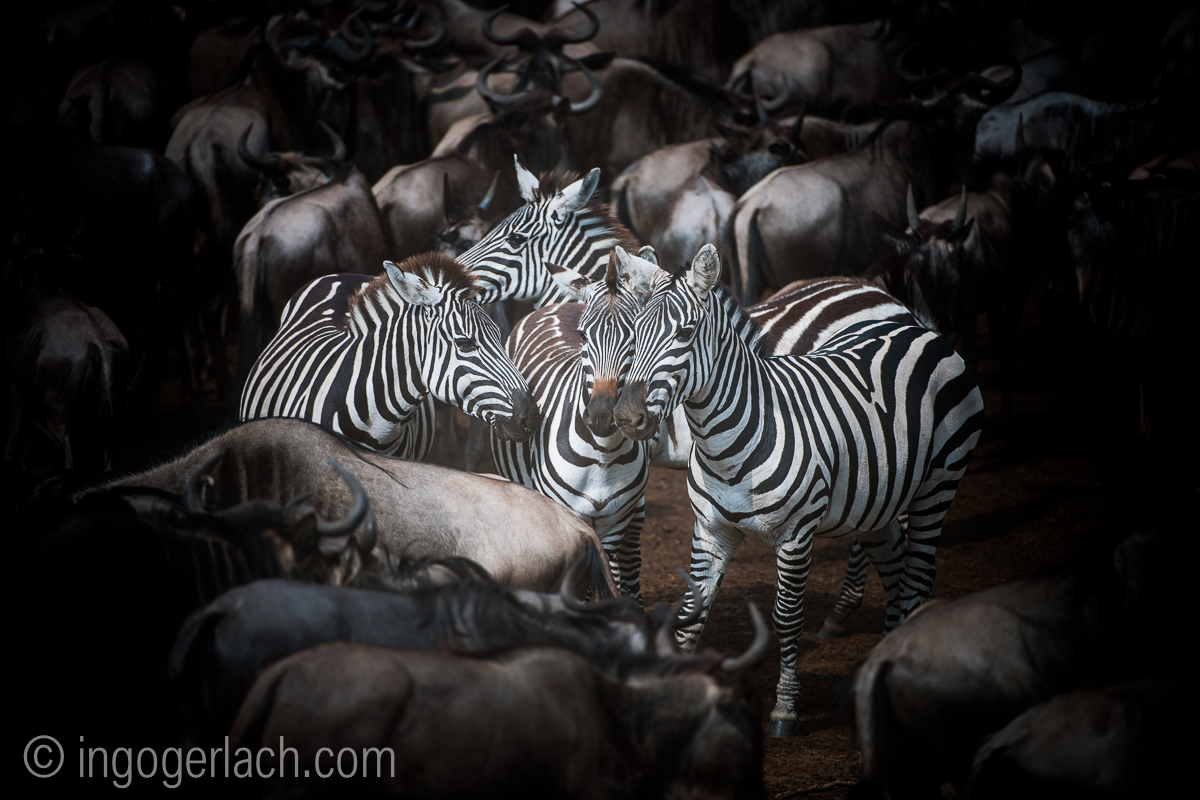 The great Migration_D3X7796