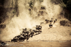 The great Migration_D3X6998