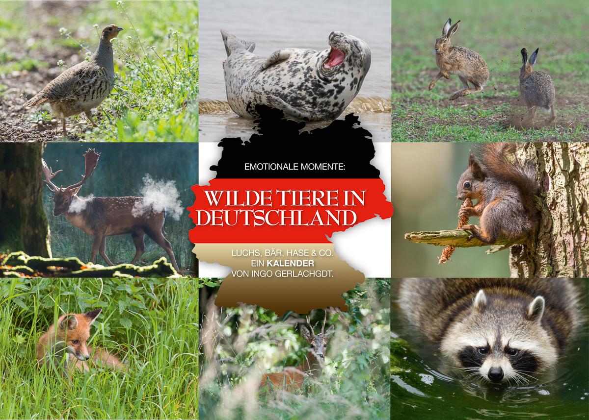 Kalender Wilde Tiere in Deutschland