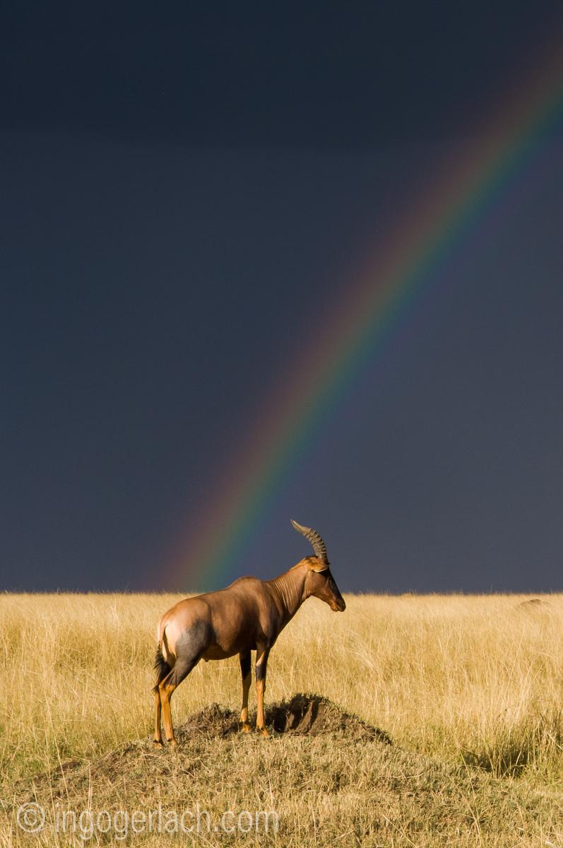 Over the Rainbow_Topi_IWG0034