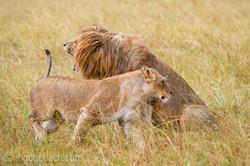 Löwen: Kampf der Giganten_D3S3947