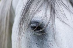 Pferdeauge © Ingo Gerlach_D3S6084