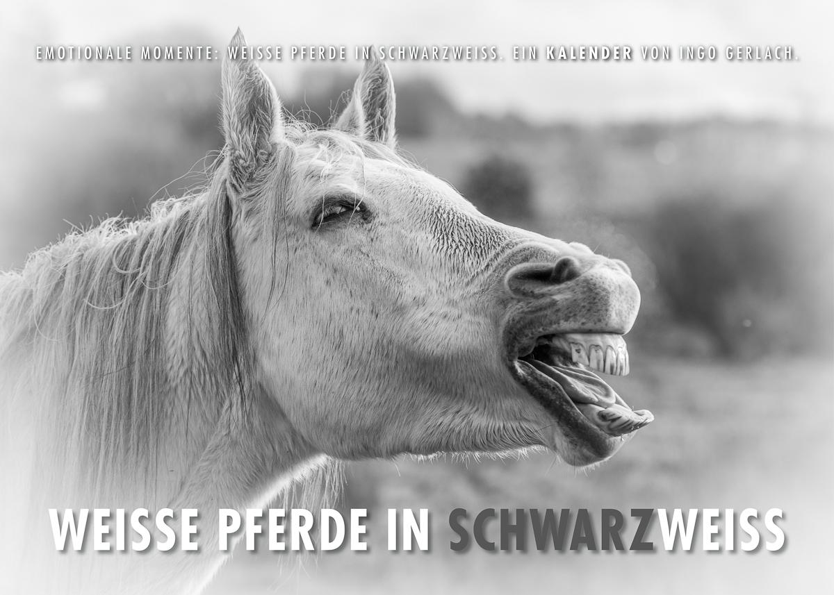 Kalender Weiße Pferde schwarzweiß