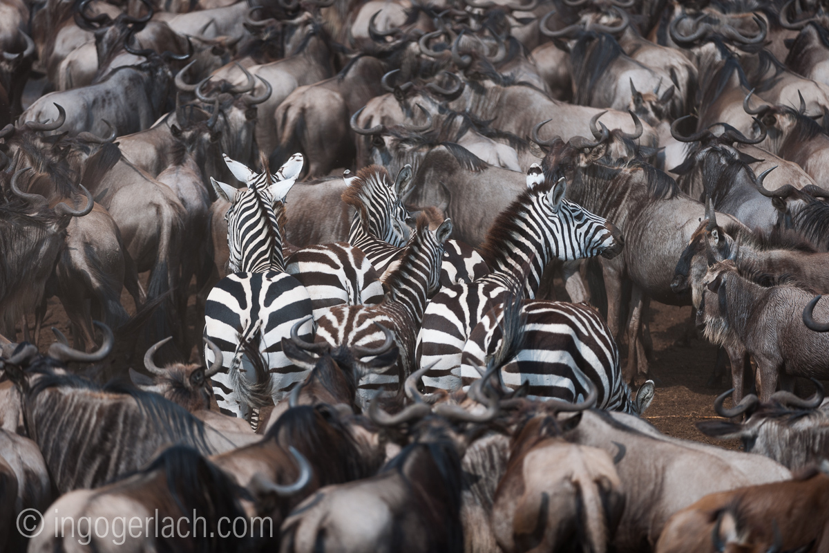 The great Migration_D3X7807