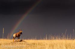 Over the Rainbow_Topi_IWG0041