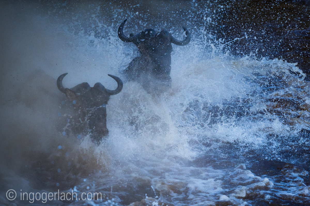 The great Migration_D3S8894