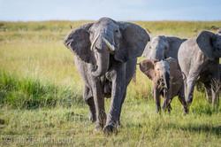 Elefanten_D4N_1536